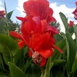 盛开 的花朵